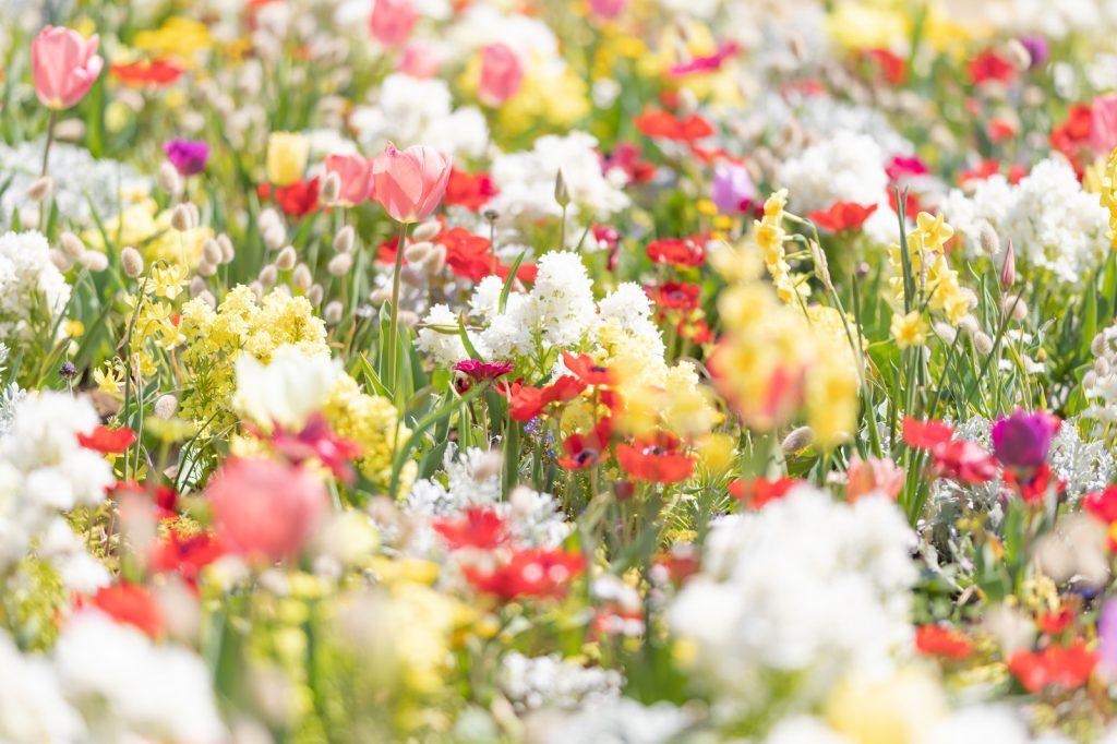 この画像には alt 属性が指定されておらず、ファイル名は 春の花-1024x682.jpg です