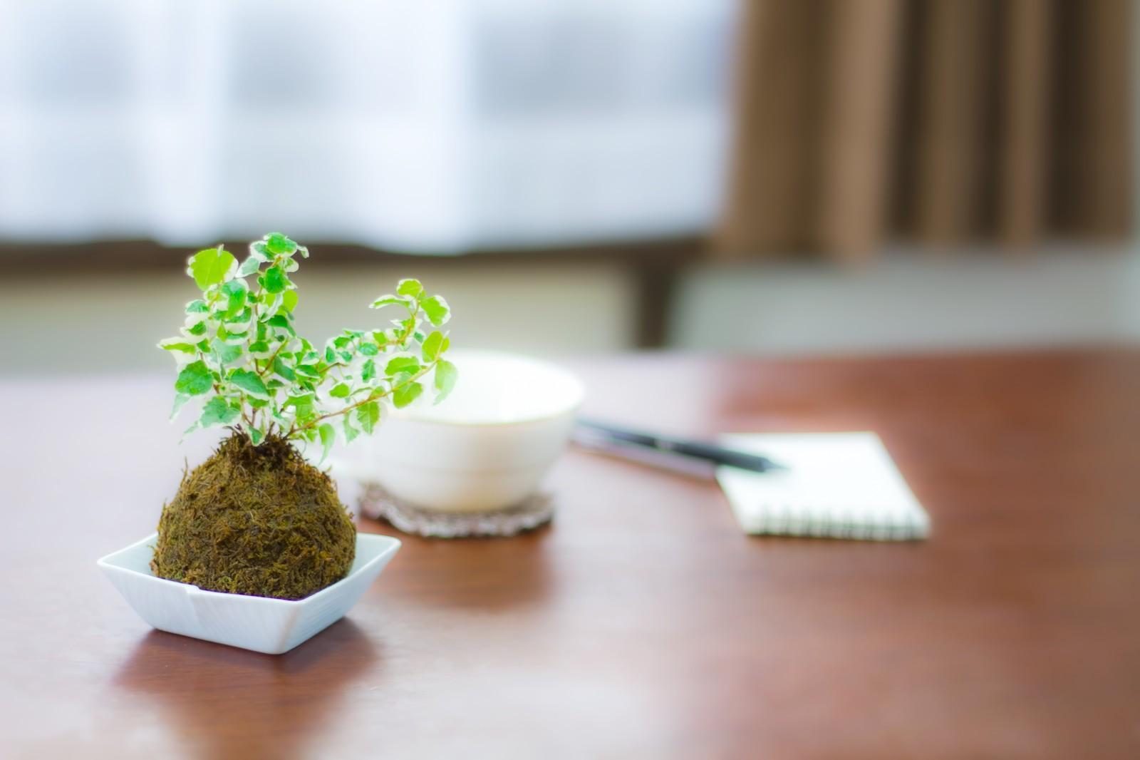 文房具と植物